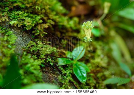 Small Flower In Rainforest
