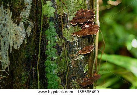 Brown Mushrooms On Tree