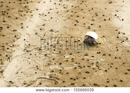Hermit Crab And Detritus Balls On Beach