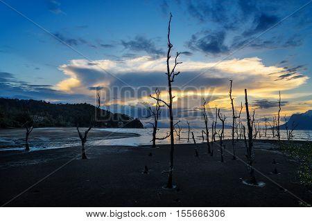 Dead Mangrove Trees On Beach At Sunset