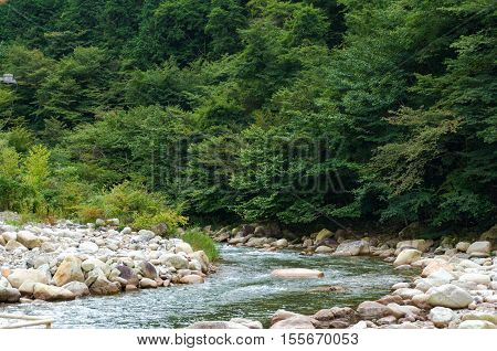 Crystal clear rapid mountain river flowing among pine trees. Japan landscape