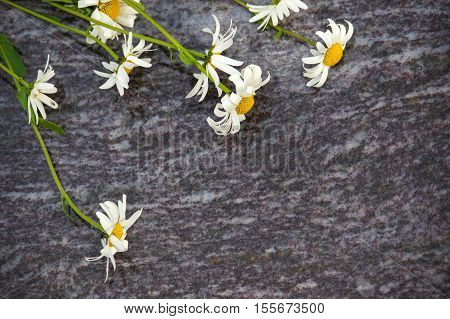 A bouquet of Chamomile flowers lying on the stone slabs marble plate with white and yellow flower