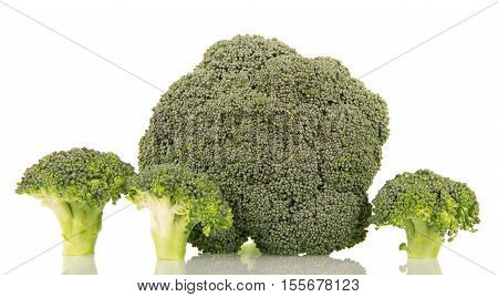 Fresh broccoli close-up isolated on white background.