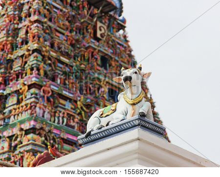 Cow and other detais of indian Kapaleeswarar temple , Chennai, India