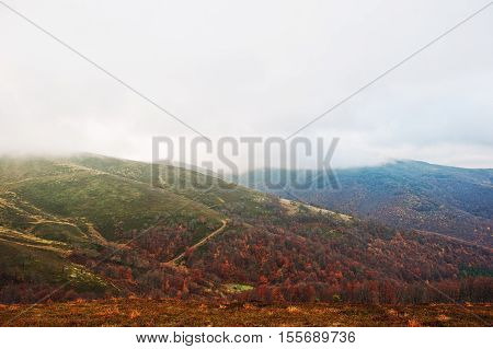 Scenic View Of Mountain Autumn Red And Orange Forests Covering By Fog At Carpathian Mountains On Ukr