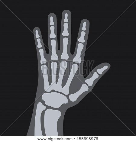 X Rays Style Human Hand. Vector illustration
