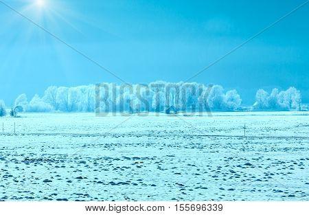 Winter Hazy And Sunshiny Landscape.