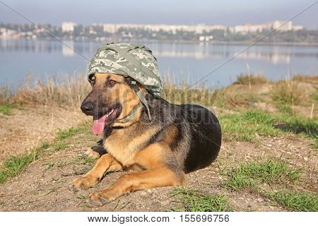 Cute german shepherd dog with military helmet lying on river bank