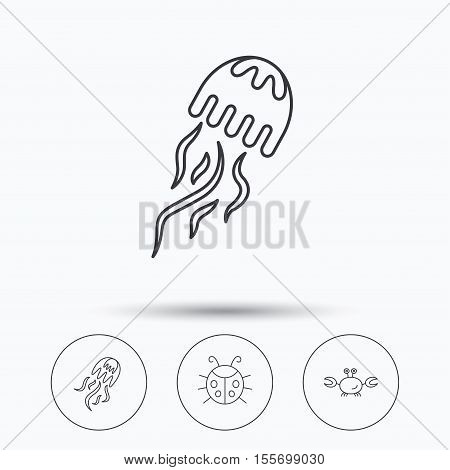 Jellyfish, crab and ladybug icons. Ladybird linear sign. Linear icons in circle buttons. Flat web symbols. Vector