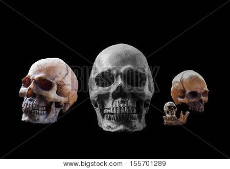 Human of skull with a black background