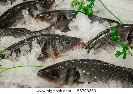 Fresh European seabass or Dicentrarchus labrax, lavpaki on ice in the greek fish shop lined up for sale refreshed by parsley. European seabass on ice in fish shop. Horizontal. Daylight. Close.