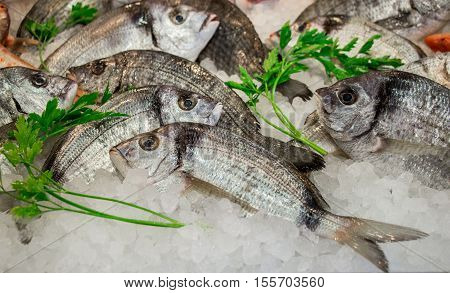 Striped bream fishes or Diploduc sargyc on ice for sale in the greek fish shop decorated with parsley. Striped bream fishes on ice and parsley. Horizontal. Close.
