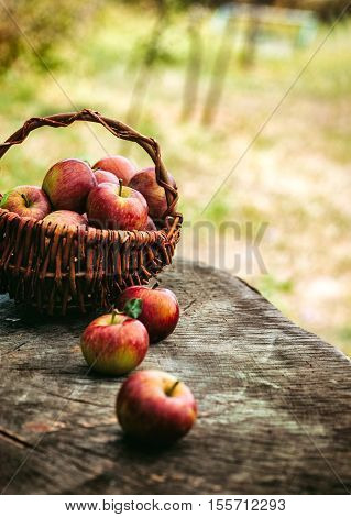 Fresh harvest of apples. Wooden background with basket full of apples. Nature fruit concept.