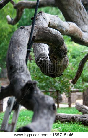 elements of the dry lifeless branches Zaporozhye oak closeup