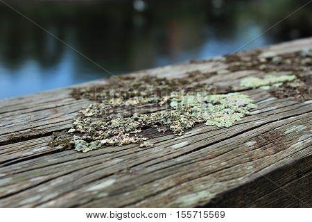 Natural picture with moss on wood, Natuurfoto met mos op hout aan het water