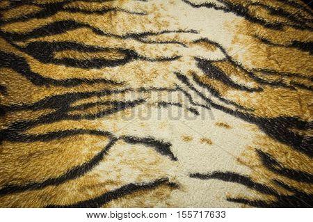 Tiger skin form jungle wildlife for background