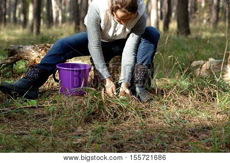 Girl collects mushrooms in a white pine forest.