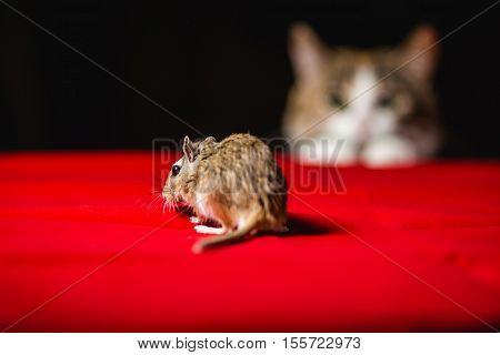 Gerbil mouse and dangerous cat on bokeh background.