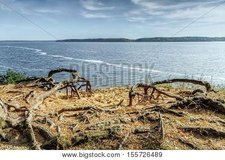 Trees Roots Near The Lagoon