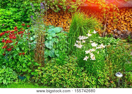 Lush landscaped garden with flowerbed and colorful plants firewood. Beautiful garden