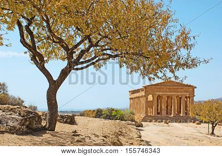 The view on the Concordia Temple with the almond tree on the goreground Agrigento Sicily Italy.