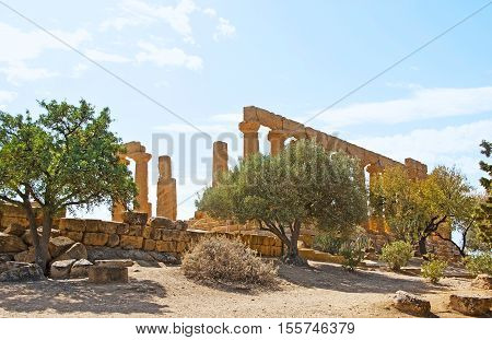 The ancient temples in Agrigento surrounded by trees and bushes growing on the dry earth of Southern Sicily Italy.