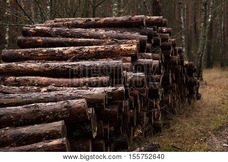 Logging, Old Wood,