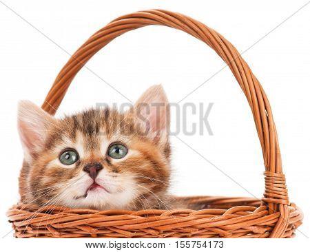 Portrait of cute little kitten in a wicker basket over white background