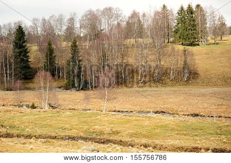 Spring landscape with meadow trees and hills in Sumava
