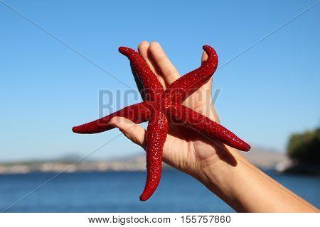 Starfish / Starfish on a palm .