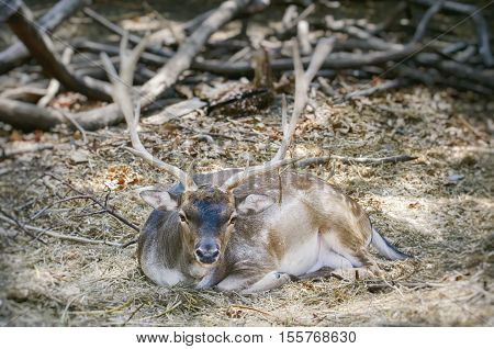 Photo of the Deer Over Natural Background