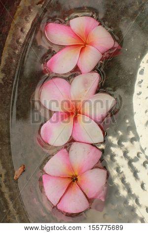 pink Hawaiian flowers in metal birdbath up close
