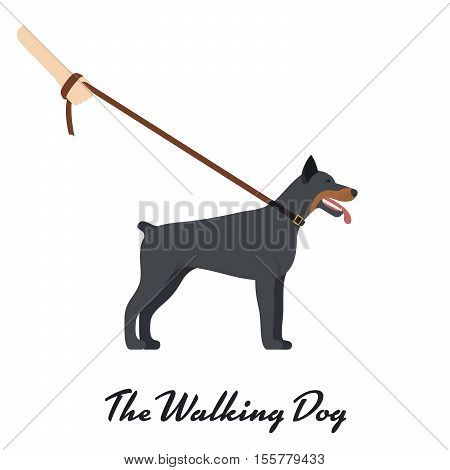 Doberman Pinscher with a leash - on white background. Vector illustration