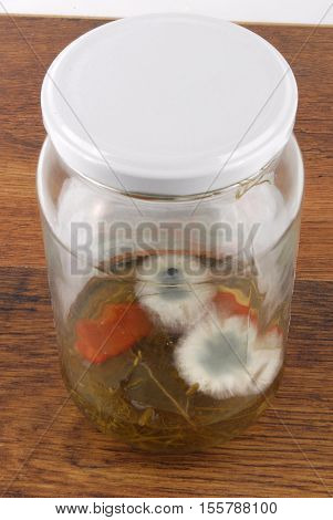 close up of the mold in jar