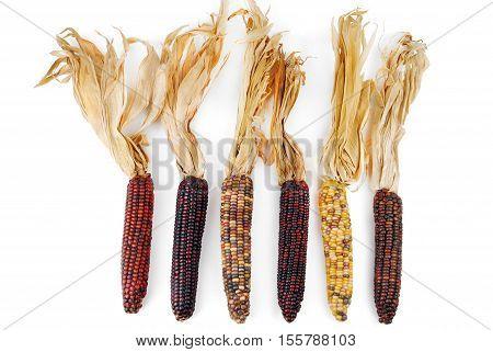 Cob corn variuos Indian isolated on white