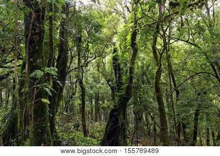 Deep jungle under rain in the Doi Inthanon mountains, Thailand