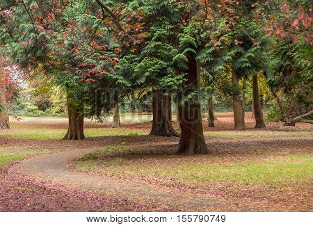 Tree trunks with a winding path covered in beautiful coloured leaves at the Glade, Sidcup, Kent.
