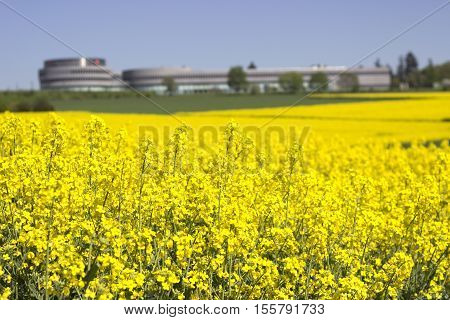 Modern factory building outdoor with canola field