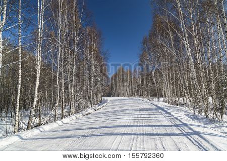 Russia Novosibirsk region snow-covered road among birches