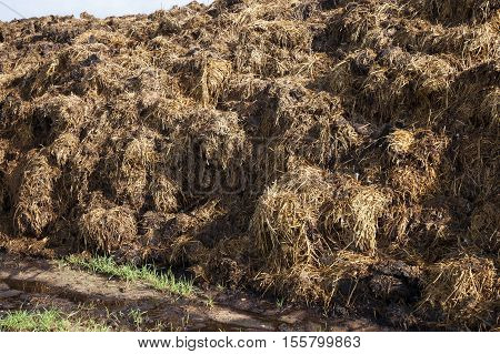 are landed in an agricultural field in a heap of manure intended for land fertilizer before planting the crop