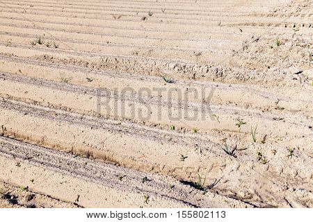 Agricultural field on which made furrows for planting a new crop, closeup