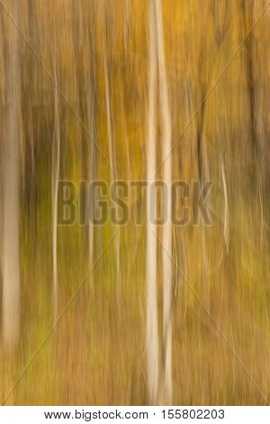 An abstract impressionistic view of a forest in autumn.