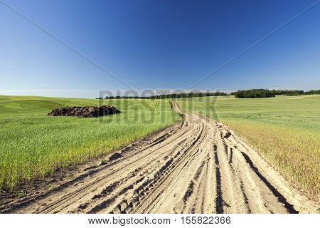 Agricultural field on which grow cereals, and through which the village Dirt road. To the left lies the manure for use as fertilizer