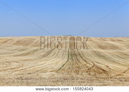 agricultural field, where on earth remained on the wheat straw after harvest