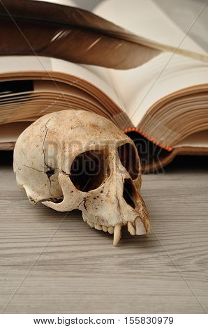 Vervet monkey skull displayed next to an open book and a quill