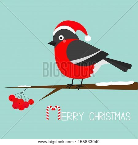 Bullfinch winter red feather bird sitting on rowan rowanberry sorb berry tree branch. Santa hat. Merry Christmas greeting card. Candy cane. Cute cartoon baby character Flat Blue snow background Vector