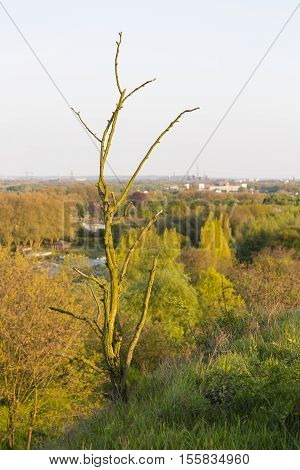 Dead Tree On Slag Heap