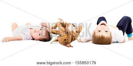 Cute children lying with a pit bull puppy isolated on white batskground