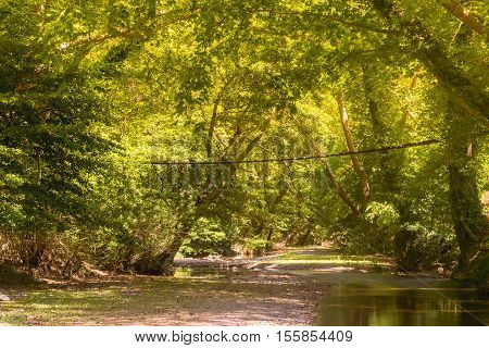 Platan forest of Prokopi in Euboea in Greece with a wooden bridge. A beautiful landscape of Kireas river with the forest.