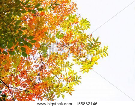 Abstract vivid color leaves on tree on white background